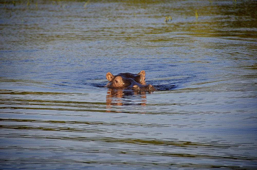 Africa-Botswana-119.jpg