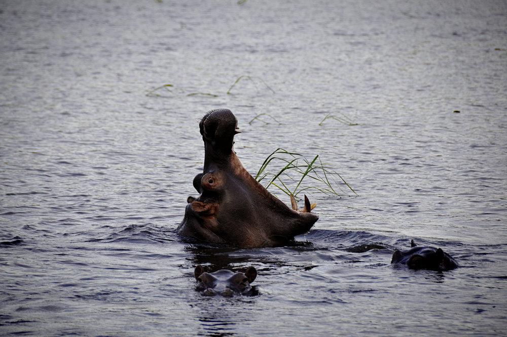 Africa-Botswana-1.jpg