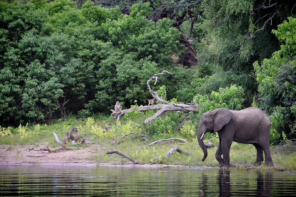 Africa-Botswana-7.jpg
