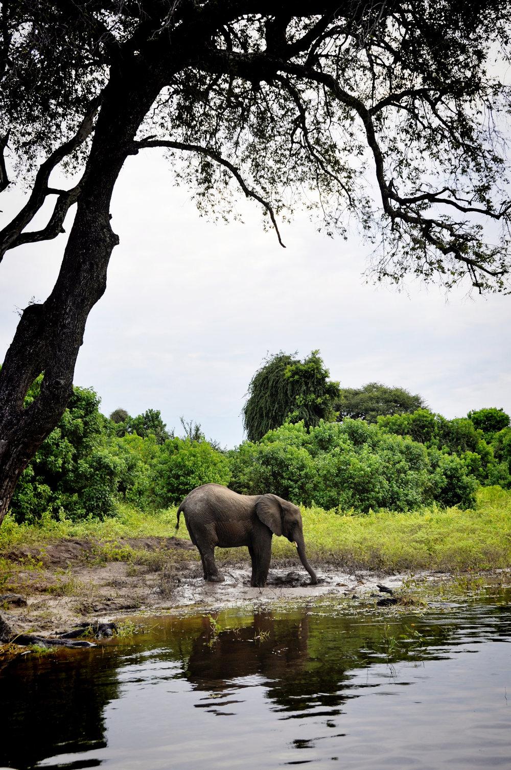 Africa-Botswana-19.jpg