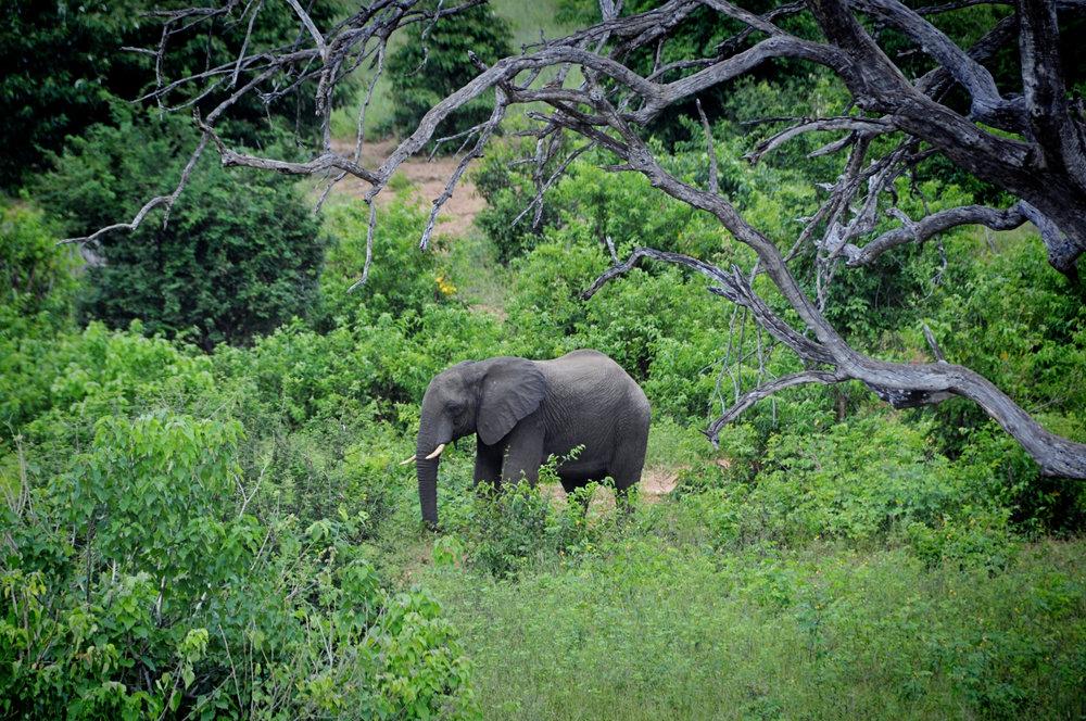 Africa-Botswana-27.jpg