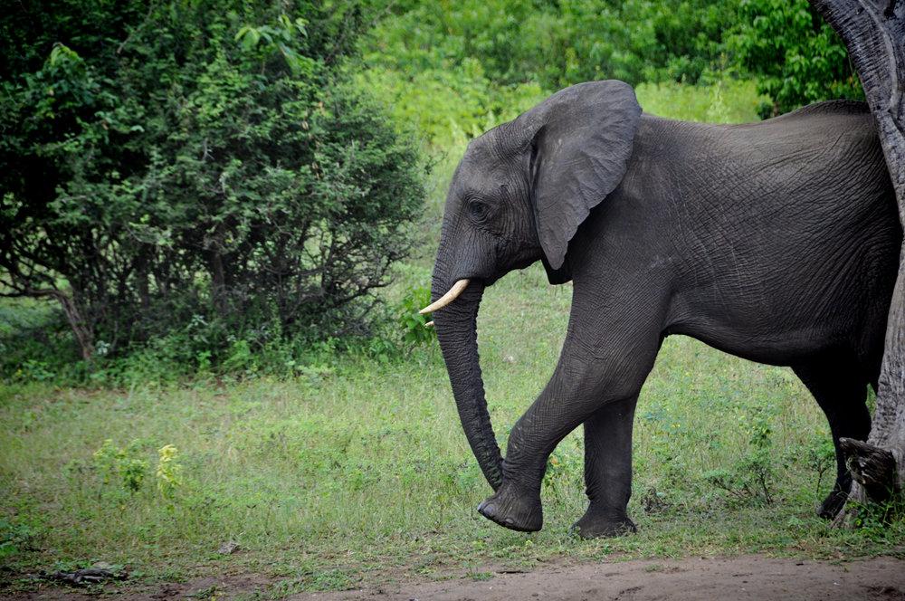 Africa-Botswana-28.jpg