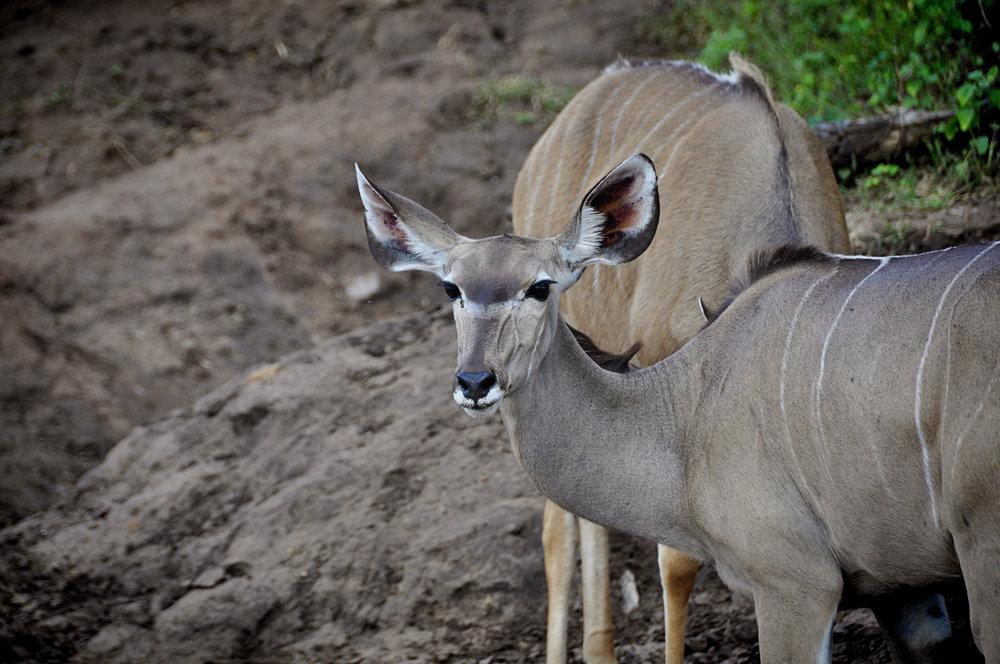 Africa-Botswana-29.jpg