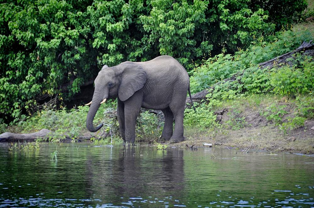 Africa-Botswana-33.jpg