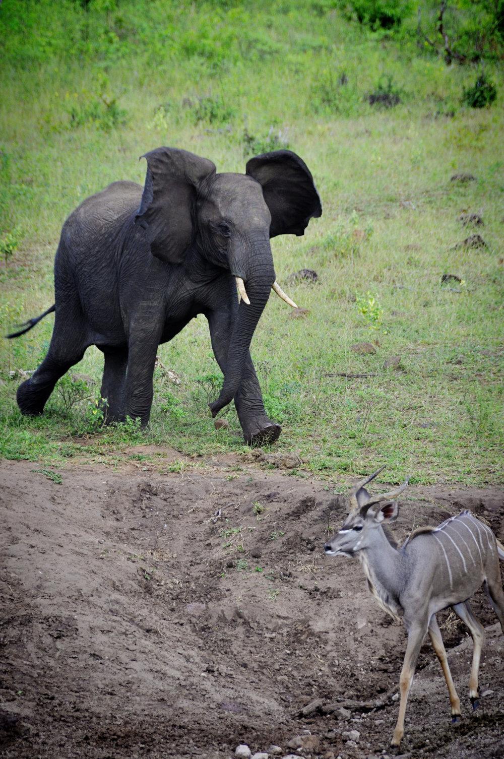 Africa-Botswana-35.jpg