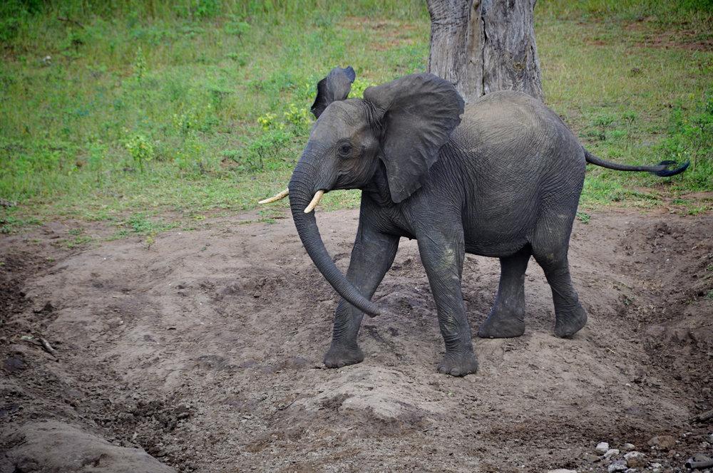 Africa-Botswana-36.jpg