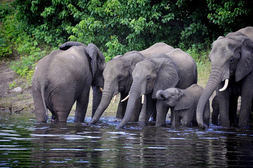 Africa-Botswana-37.jpg