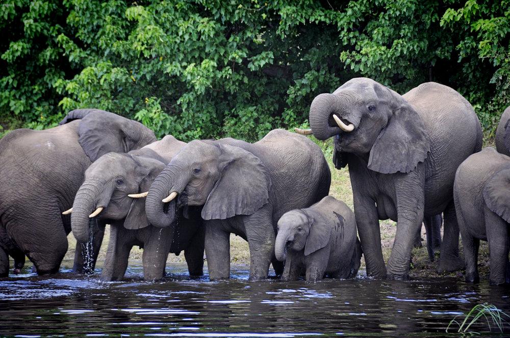 Africa-Botswana-40.jpg