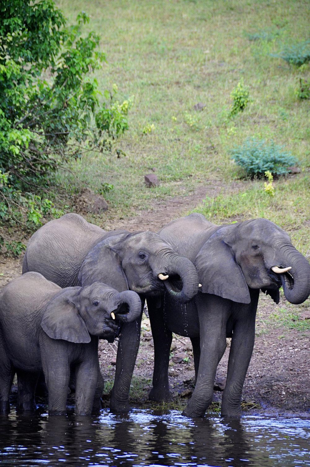 Africa-Botswana-41.jpg