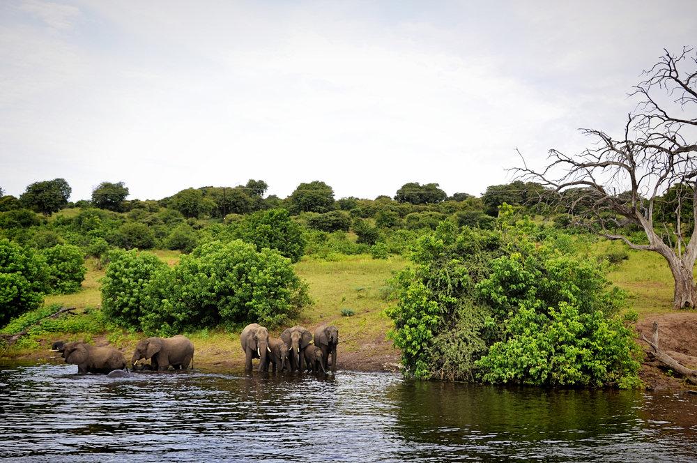 Africa-Botswana-42.jpg