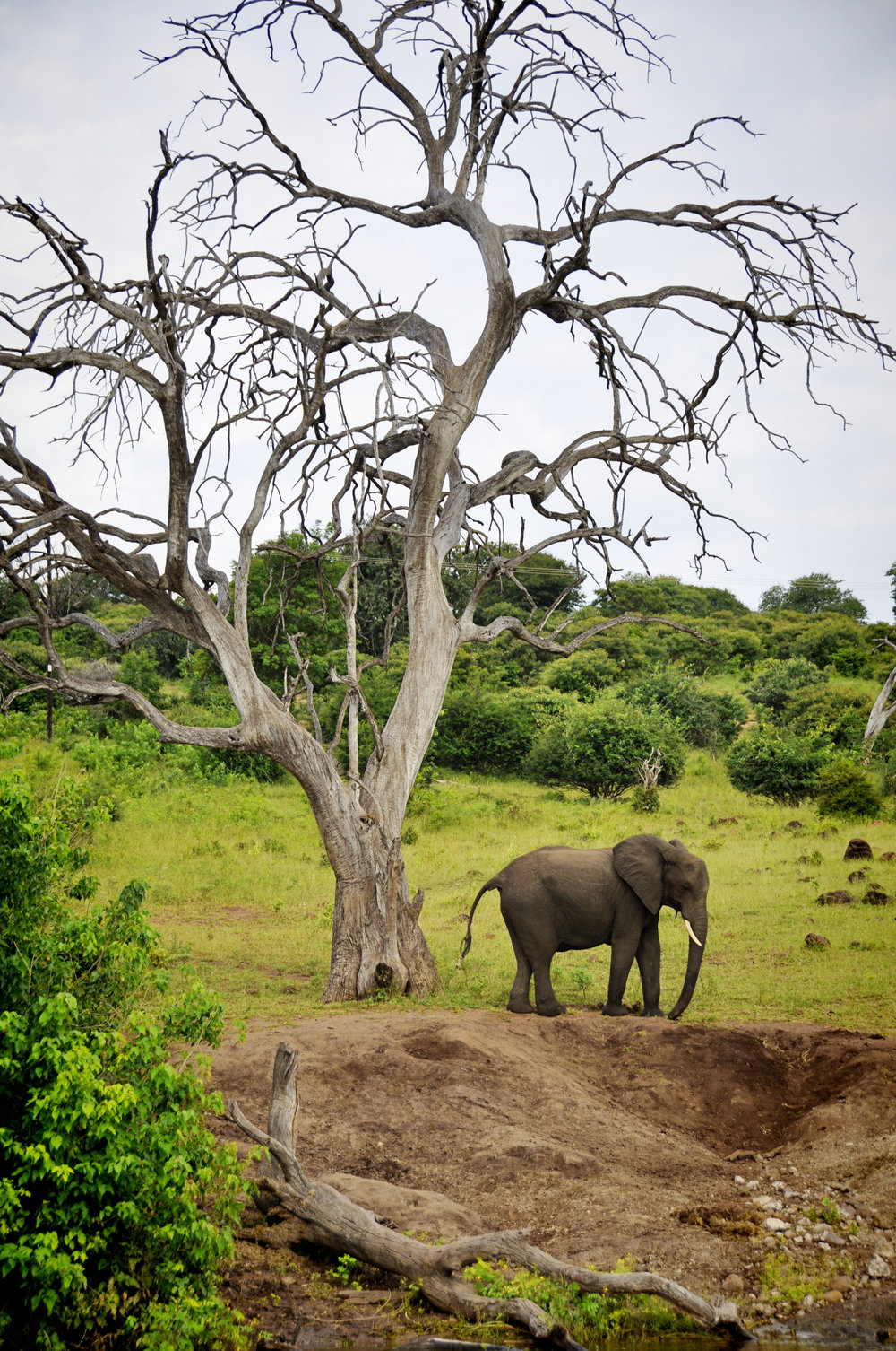 Africa-Botswana-50.jpg