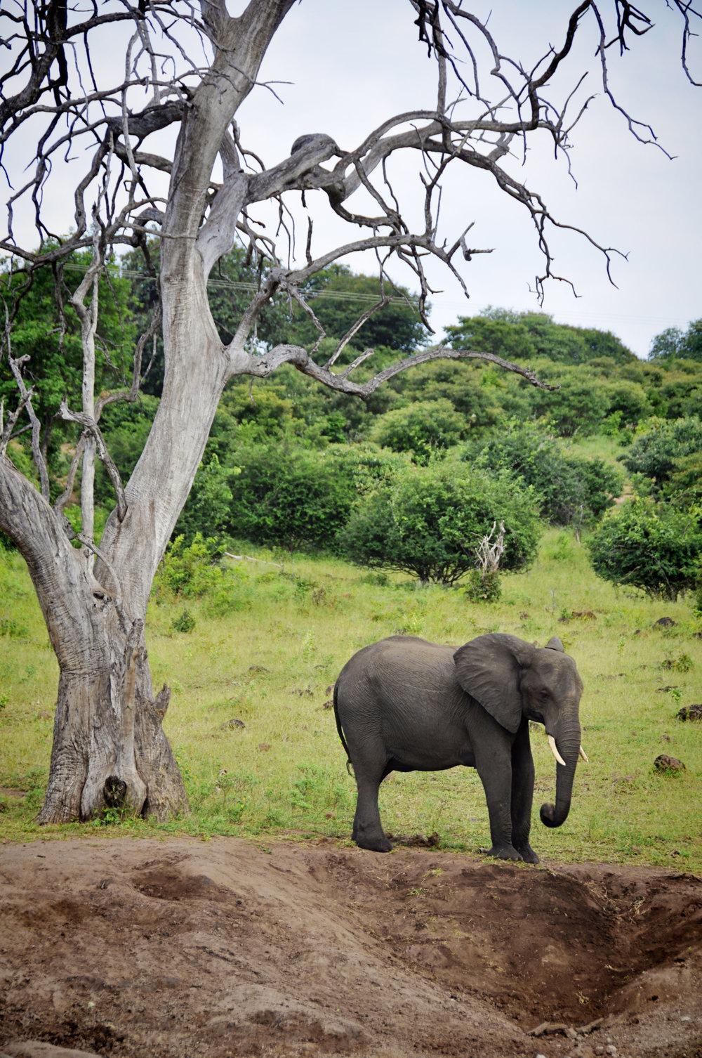 Africa-Botswana-51.jpg