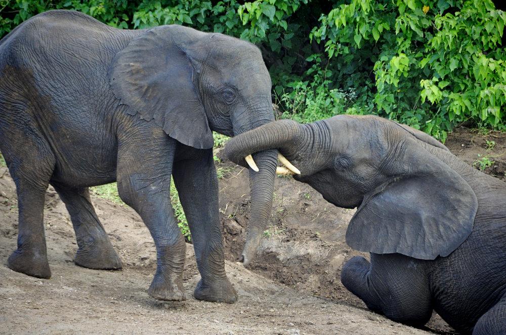 Africa-Botswana-54.jpg