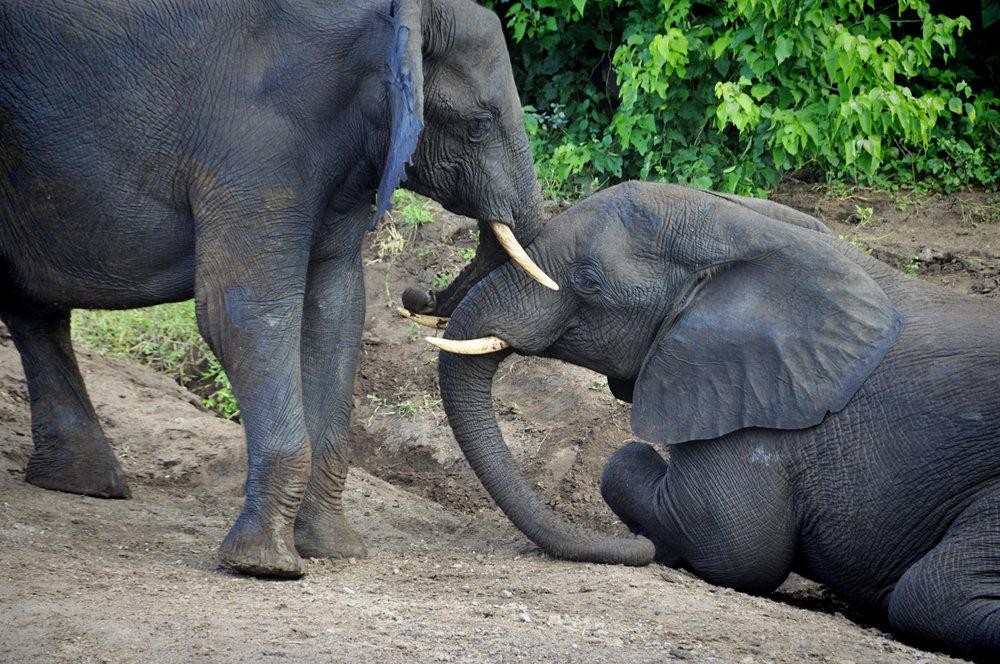 Africa-Botswana-55.jpg