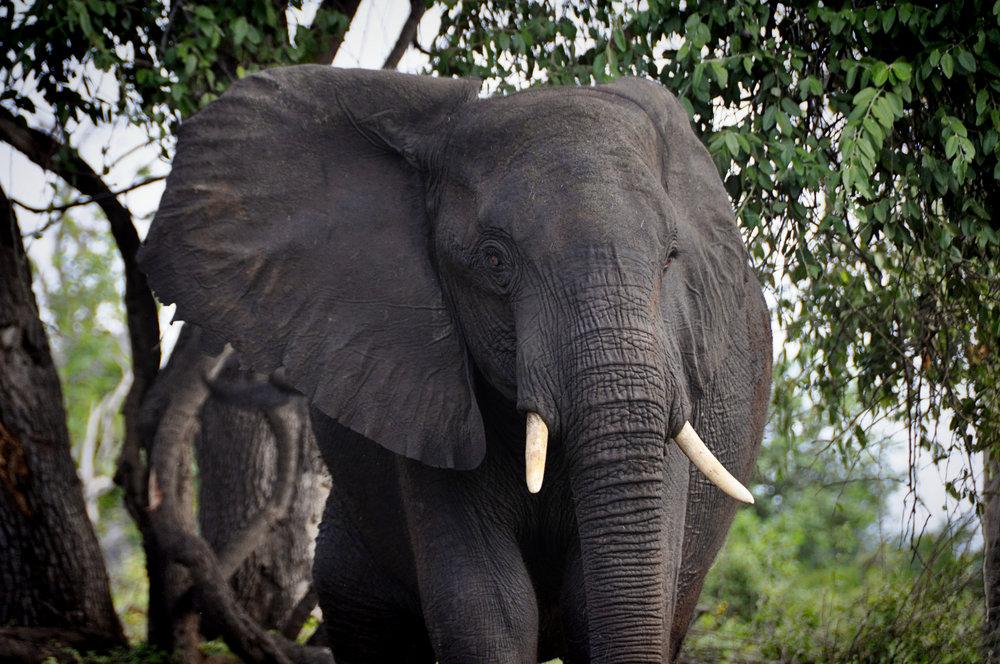 Africa-Botswana-59.jpg