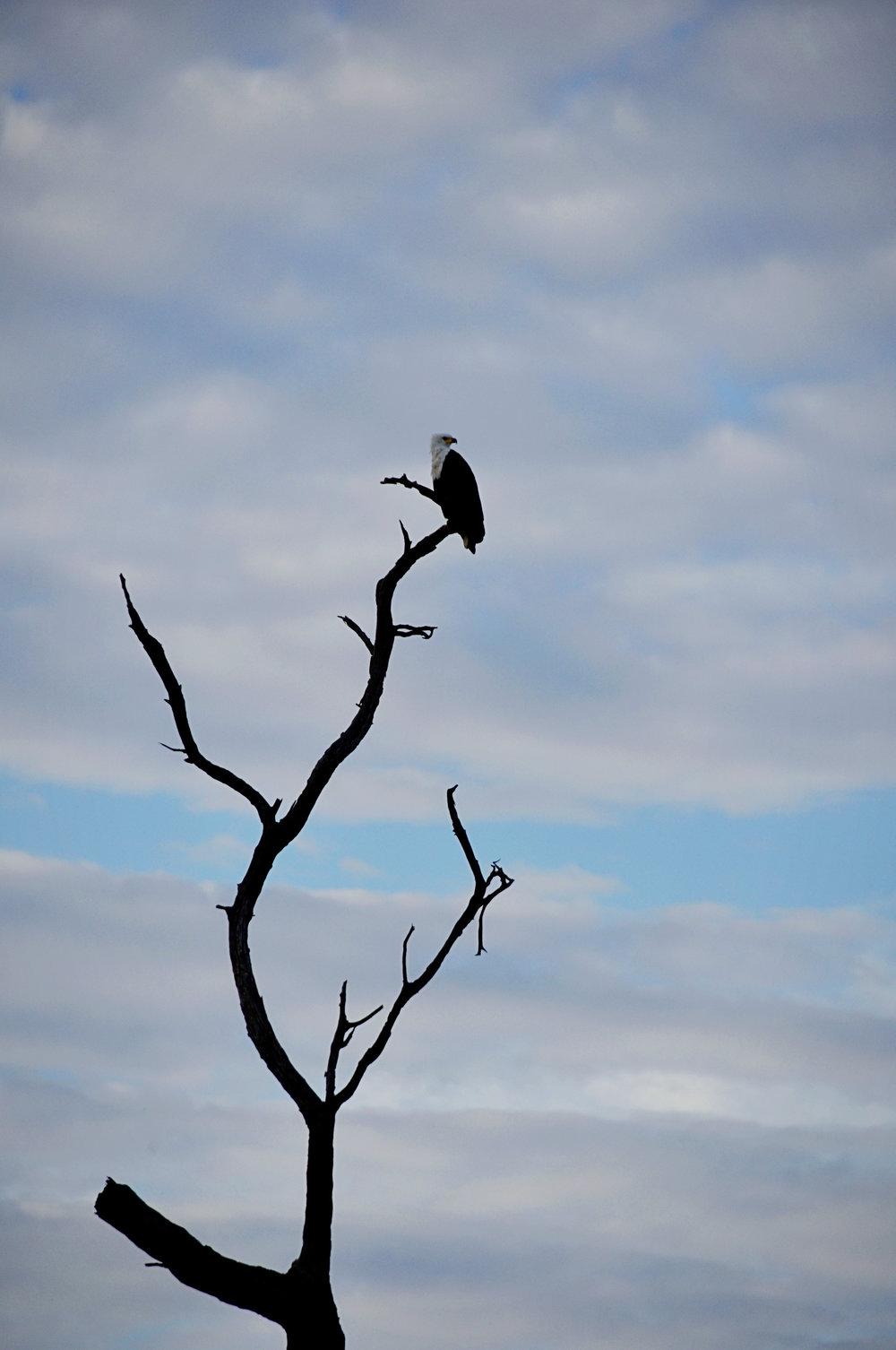 Africa-Botswana-69.jpg
