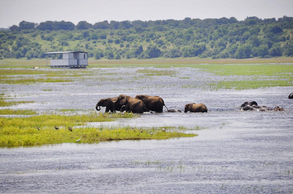 Africa-Botswana-95.jpg