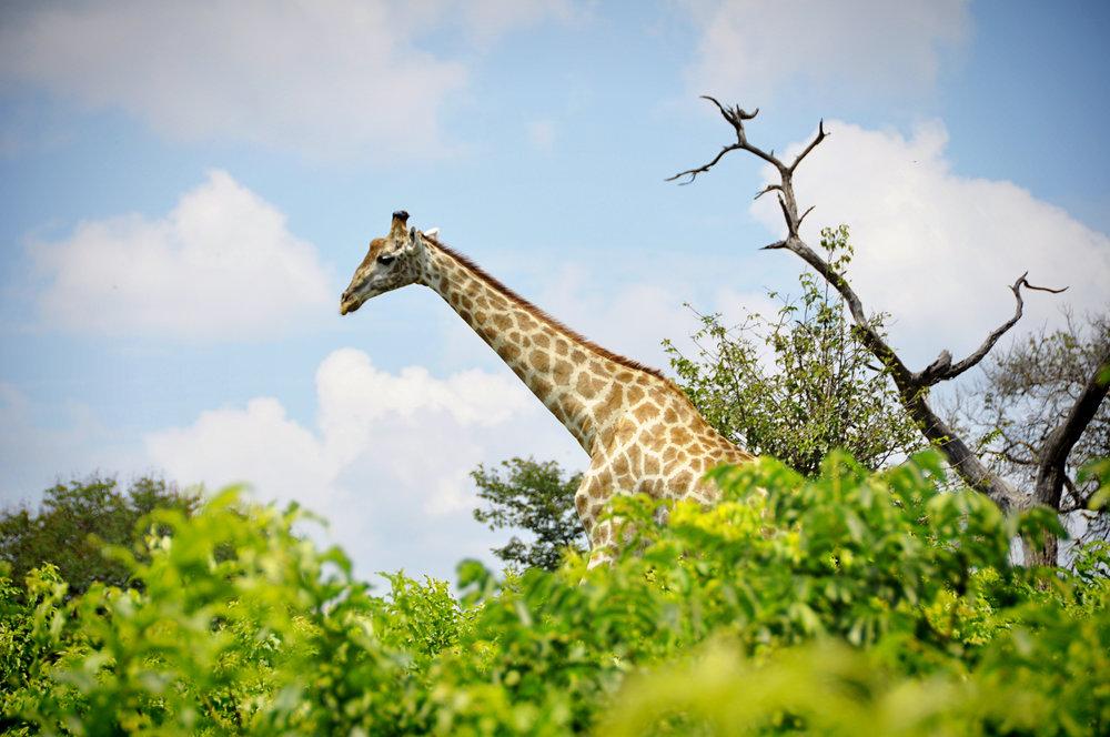 Africa-Botswana-99.jpg