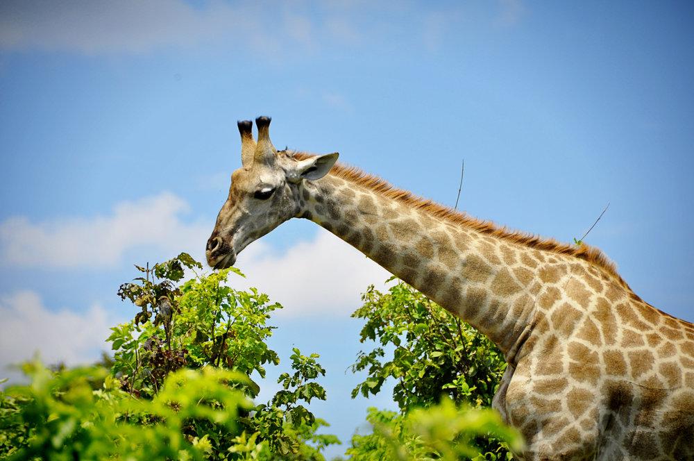 Africa-Botswana-100.jpg
