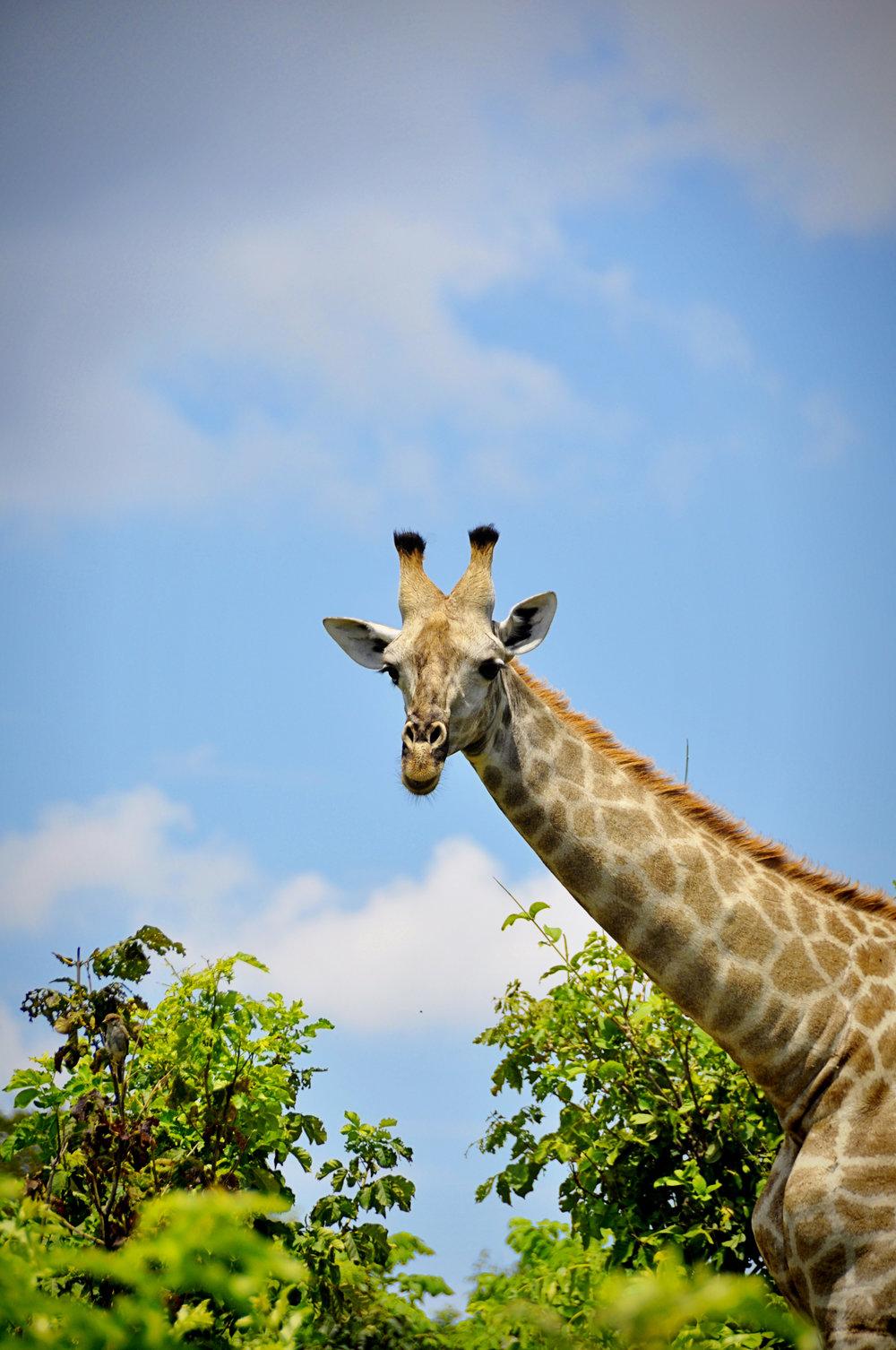 Africa-Botswana-102.jpg