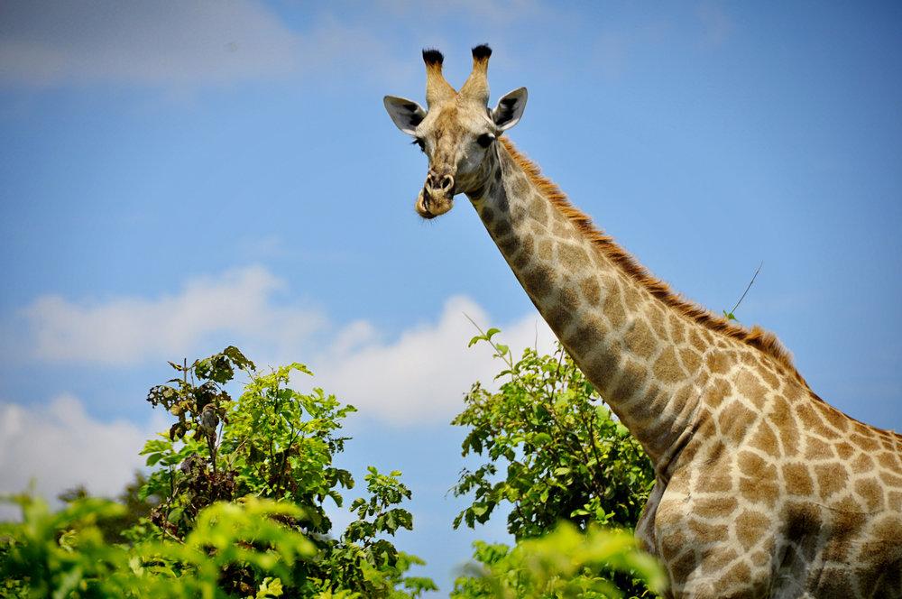 Africa-Botswana-103.jpg