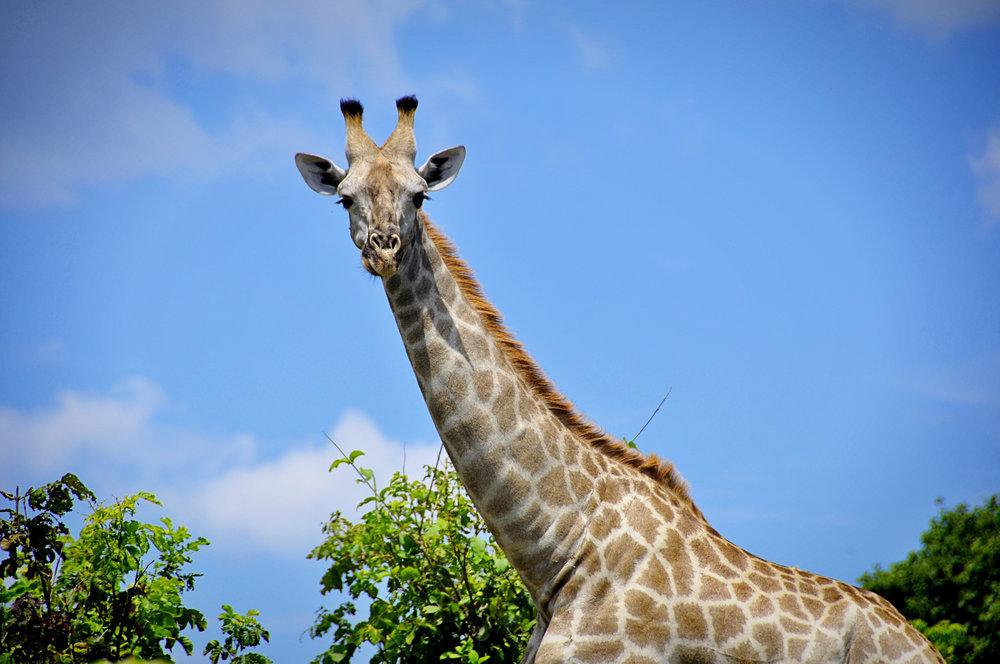 Africa-Botswana-104.jpg