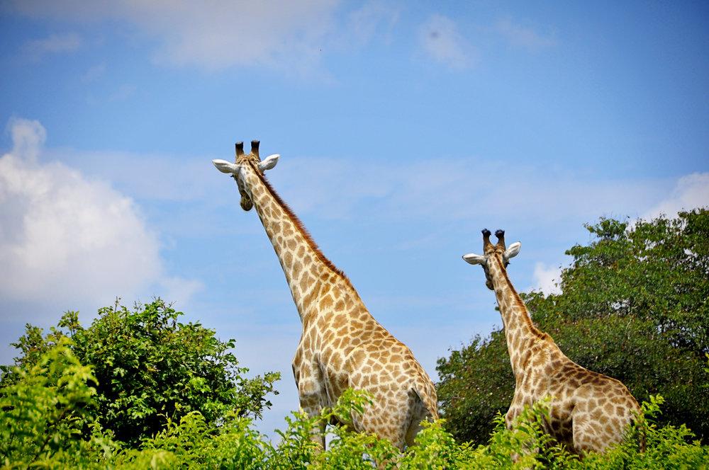 Africa-Botswana-106.jpg
