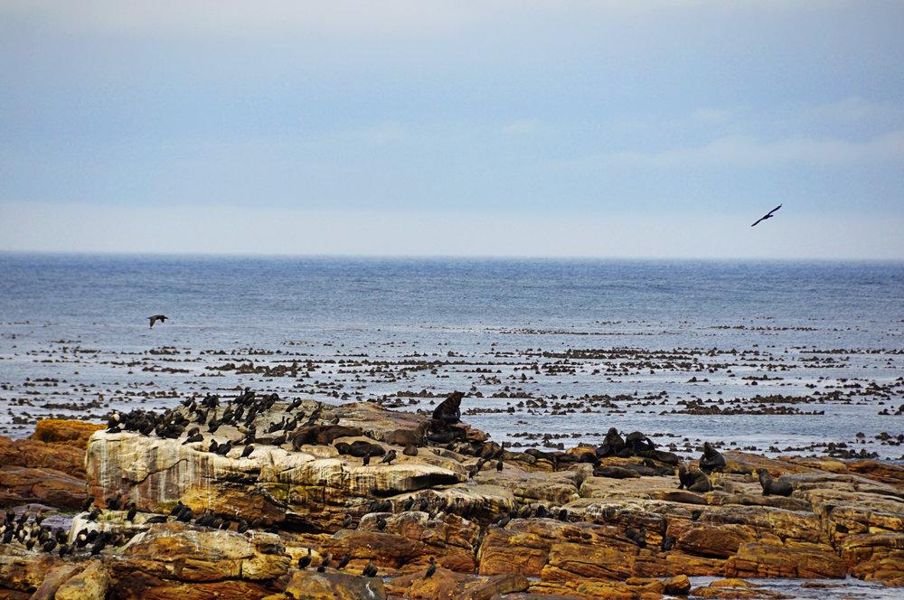 Africa - CapeTown---5.jpg