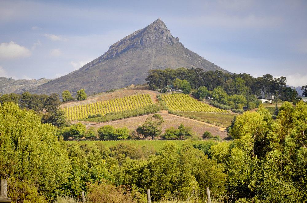 Africa - Stellenbosch-2.jpg