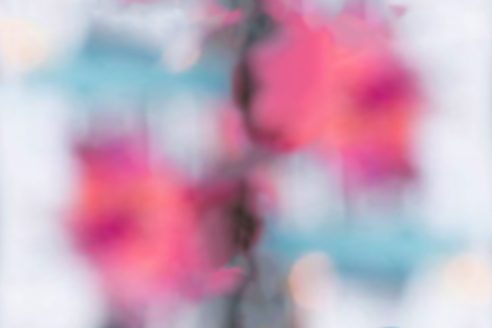 bella+flora4.jpg