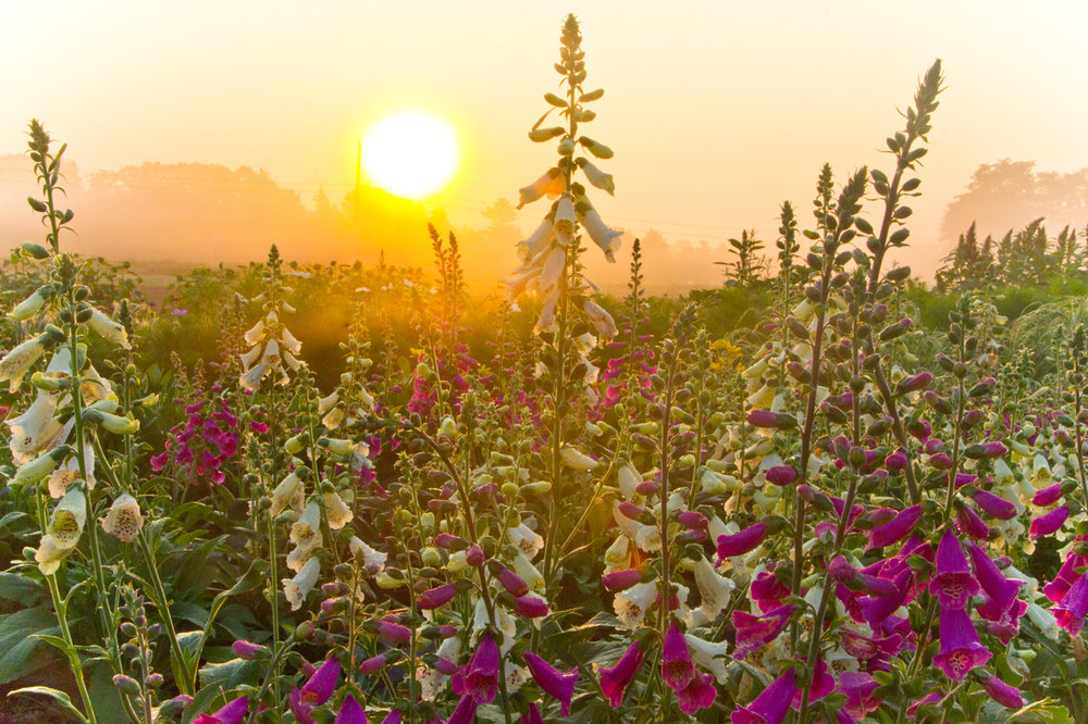flower-sun-hi-res.jpg