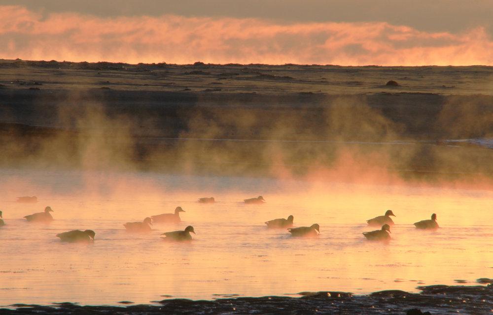 Sea-Smoke-Canadanian-Geese.jpg