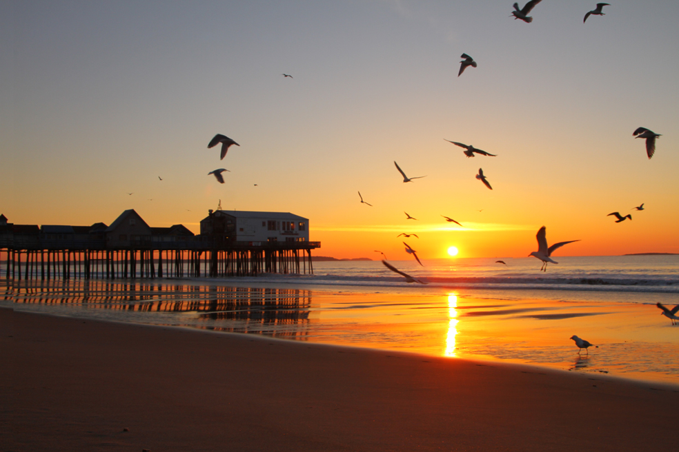 sunrise-gull.jpg
