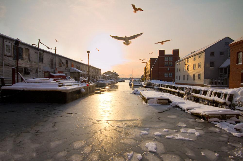 harbor-birds-sml.jpg