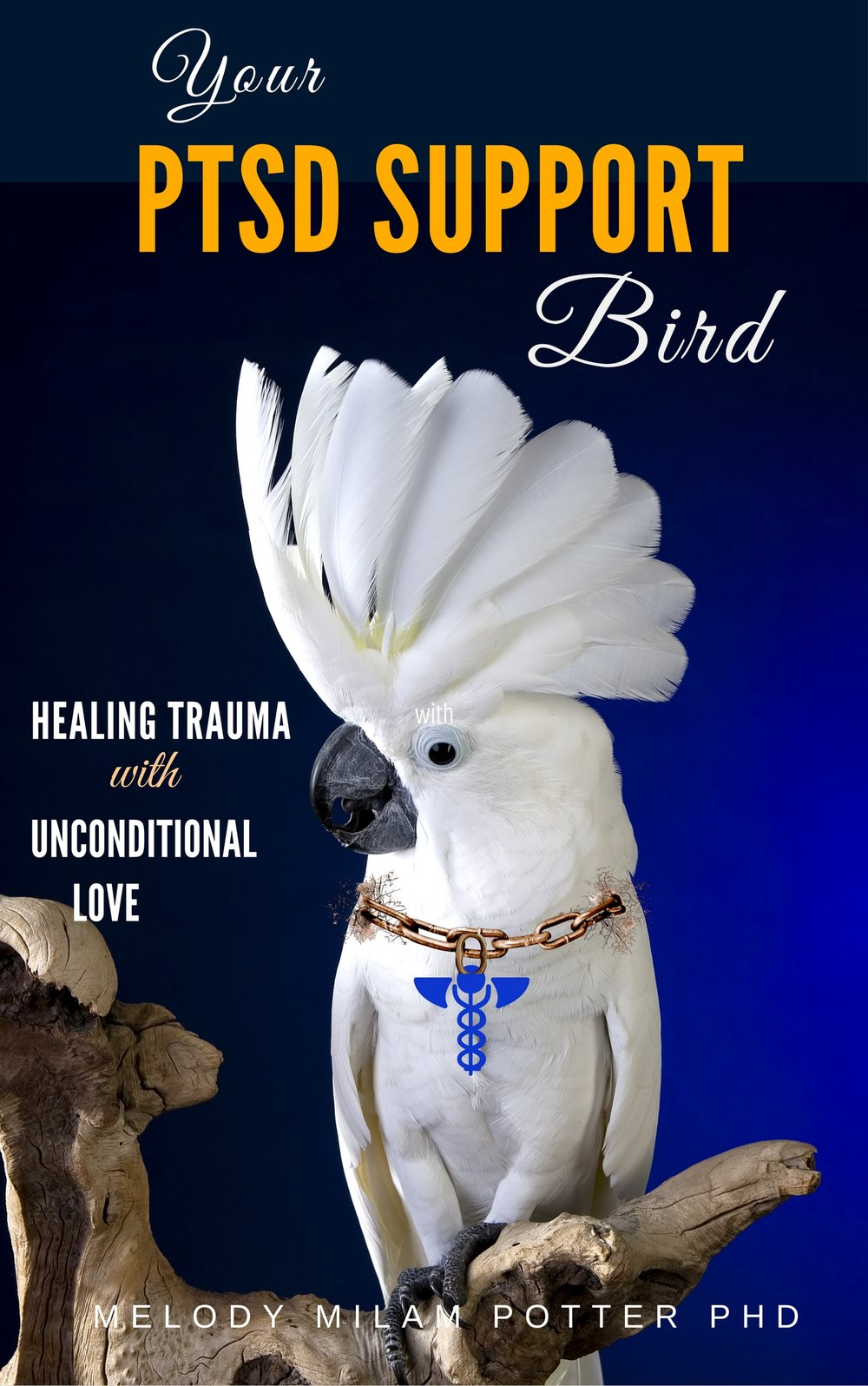 Learn how the love of a parrot can treat PTSD even when psychotherapy can't.