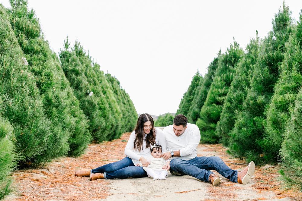 Orange County Holiday Mini Session at Christmas Tree Farm