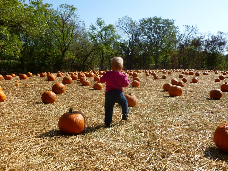 Pumpkin Patch.jpg