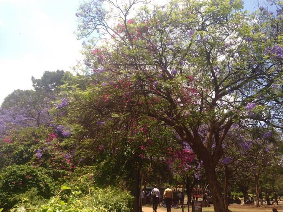 NAIROBI 1.jpg