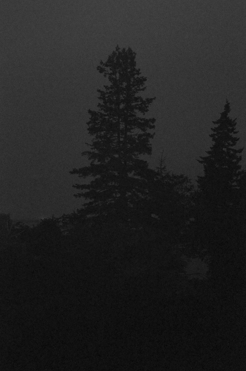 Midnight Spruce  2009-11