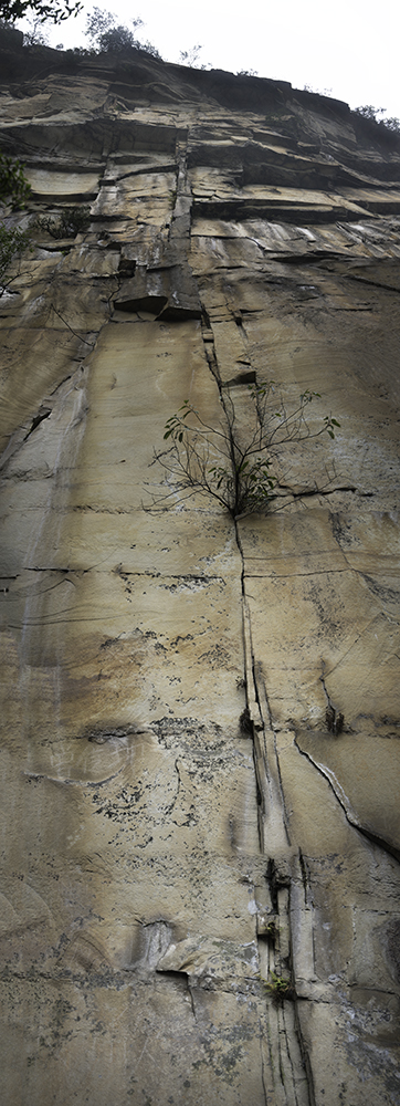 Cliff-Repo_6155-68-CC-10x3.5.jpg