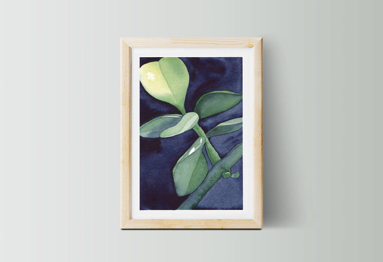 Succulent Study No.3 — medium — Lyndsey Knight
