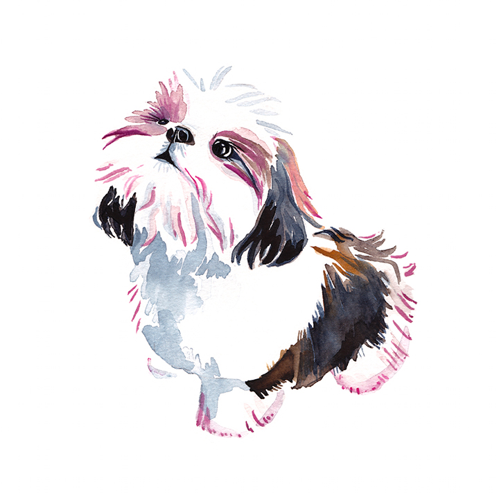 maltese custom dog painting