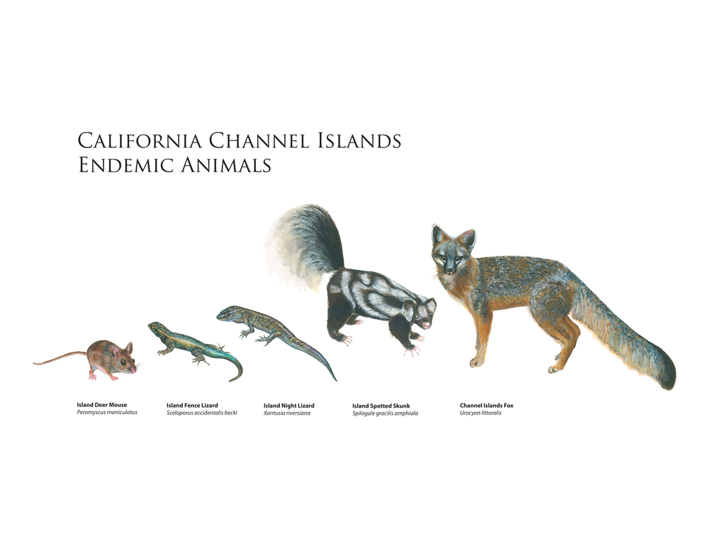 channel islands endemics rgb.jpg