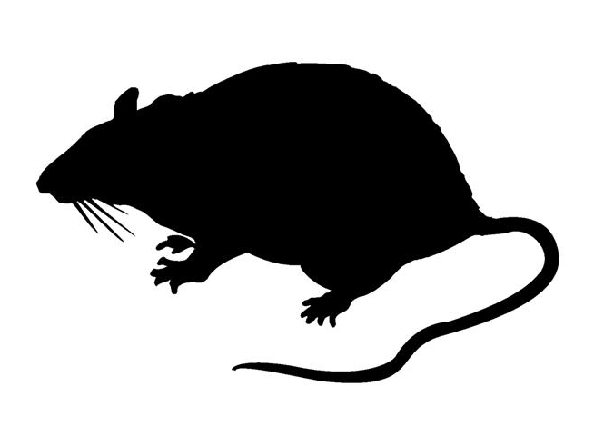 Rat Silhouette (Small).jpg