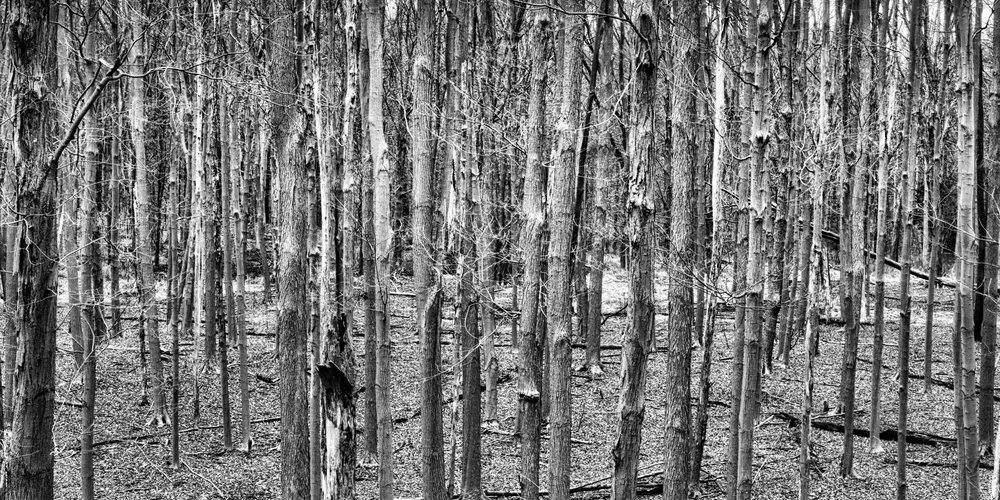 B&W Trees.jpg