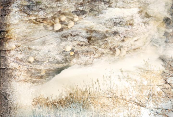 Mushroom ice
