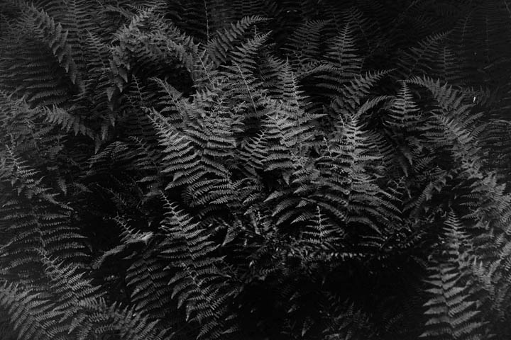 ferns (1 of 46).jpg