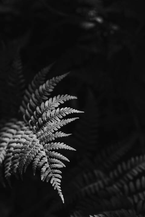 ferns (4 of 46).jpg