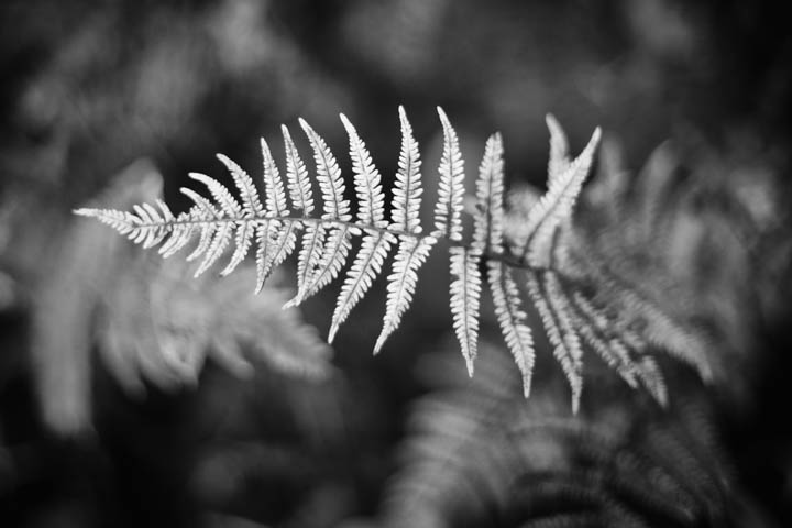 ferns (7 of 46).jpg