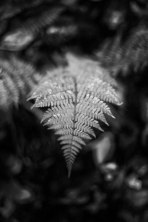 ferns (10 of 46).jpg